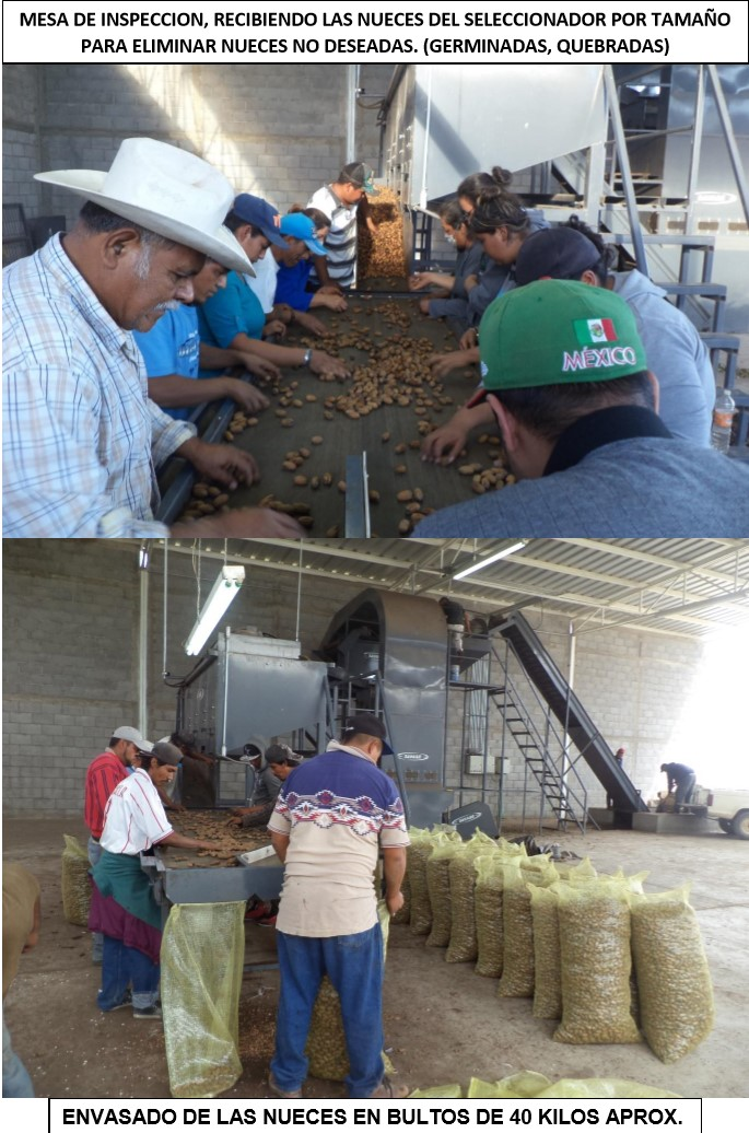 Nuez - Integradora de Productores de Nuez de la Región de Nazas SA de CV
