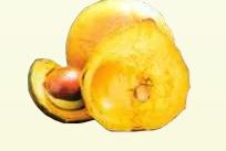 Lúcuma  - San Lorenzo Foods
