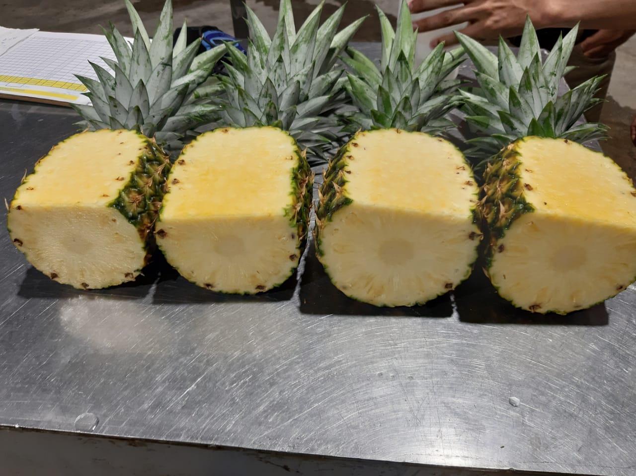 Piña - AGROMOTTA